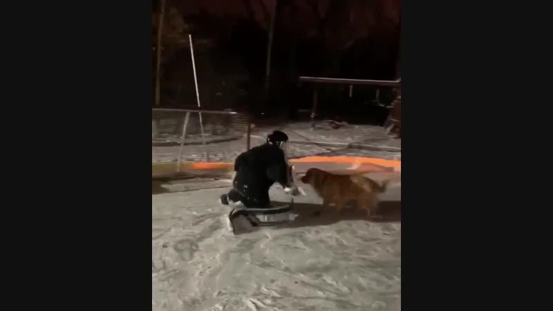 Собачья работа