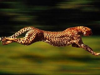 Советник форекс gepard