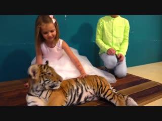 Мистер макс поздравляет. Игрушки Мисс Кейти. БРИЛЛИАНТЫ с тиграми на 4 года Мисс Кэти (Новое видео, 2019) - детский канал ютуб