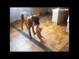 ПРИКОЛ!!! Котенок у собаки изо рта мясо забирает - Funny Cat Wants a Piece of Dog Food