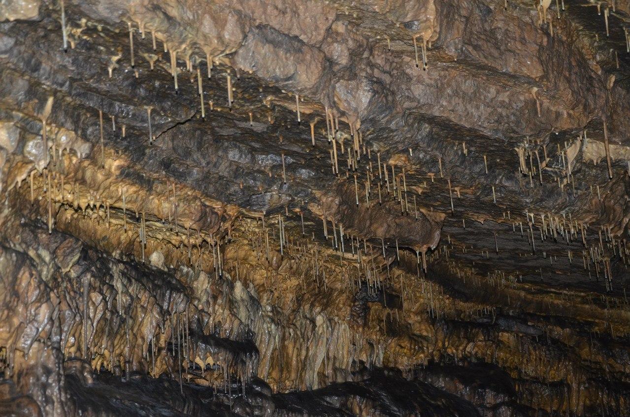 Натечные образования ″соломка″ на сводах грота Майской пещеры (20.12.2015)