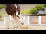 Классное видео с лошадками