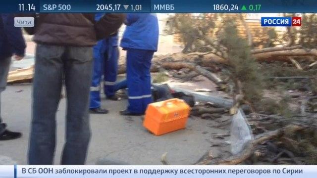 Новости на «Россия 24» • Рухнувшее из-за сильного ветра дерево убило женщину в Чите