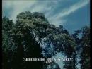 Los árboles de Buenos Aires Torre Nilsson 1957