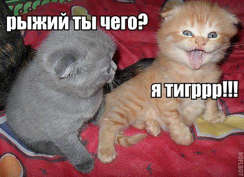 Фото №359754142 со страницы Максима Романова