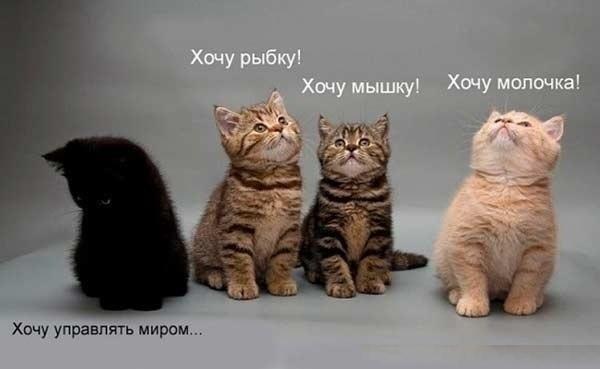 коты приколы картинки: