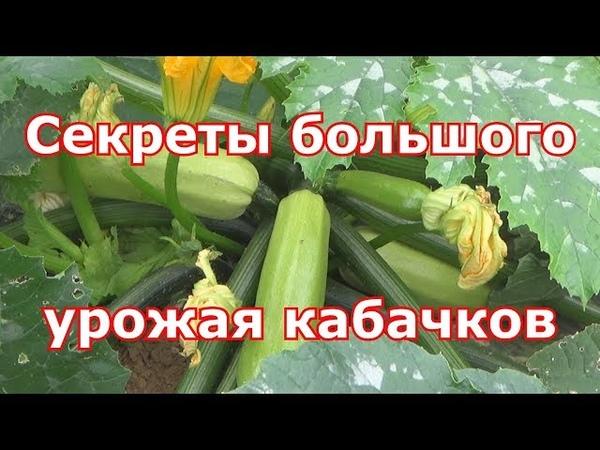 Выращивания кабачков, цуккини и патиссонов особым способом. Всегда будете с урожаем