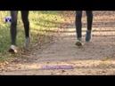 Чемпионат и первенство Витебской области по кроссу