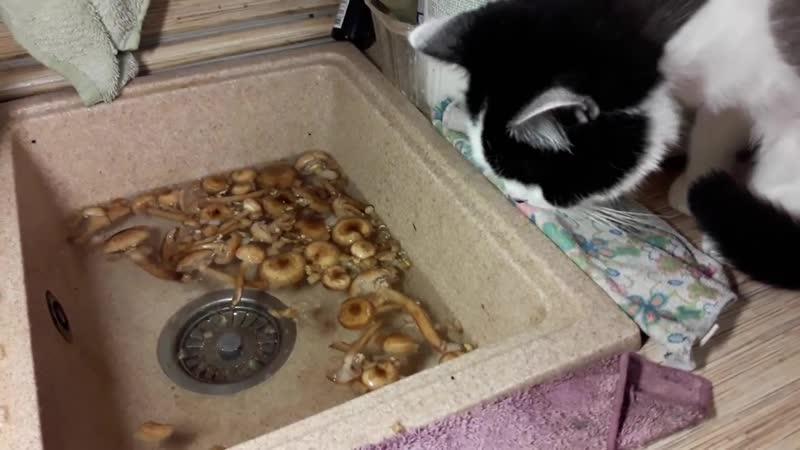 Приколы с котами 😁 Как отличить грибы 😁 Нюхач