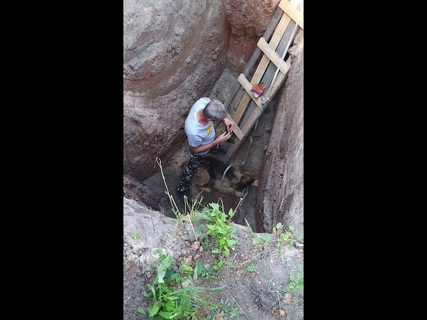 Саша и ребята вытаскивают пса из ямы