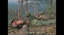 Жестокий Вьетнам от первого лица Хроника без обрезки
