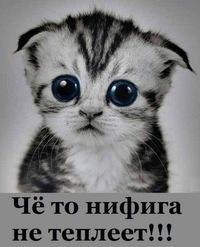 Думаю, что США вскоре примут решение о предоставлении летального оружия Украине, - конгрессмен Херд - Цензор.НЕТ 9703