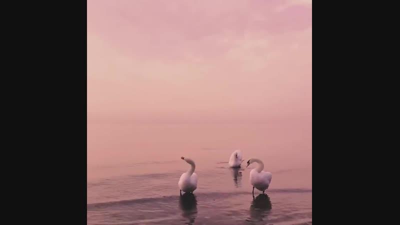 Нежный лебединый закат в Евпатории