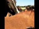 Потрясный weekend 🐎💕лошади🐴 лошадки лошадивмоёмсердце подвпечатлением любовьклошадям❤️
