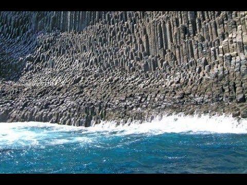 Обнаружено древо кремниевой эры на берегу чёрного моря