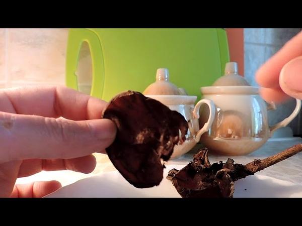 Аурикулярия уховидная Лечебные свойства и подробное описание гриба
