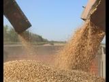 Как американцы губят российский урожай ради Украины