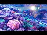 Reef &amp Saltwater Aquariums from Interzoo 2018 - 4K