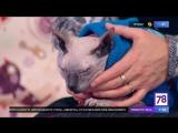 Самый гладкий кот в программе