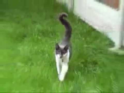 Когда атакуют коты