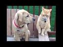 Очень смешные моменты с котами и собаками вместе!