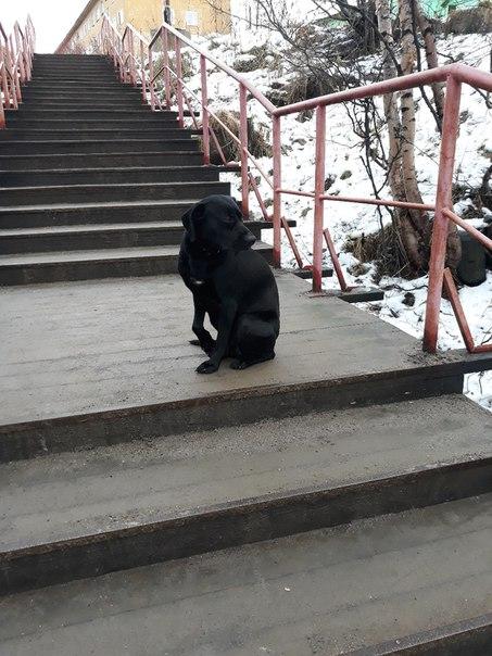 Фото №456309379 со страницы Оксаны Шириновой