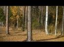 Золотая осень на Чёрной речке и Рыбинском водохранилище А В Огурцов