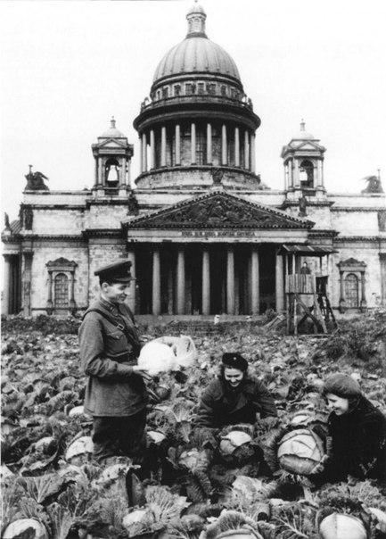 Сегодня исполняется 70 лет со дня снятия блокады Ленинграда. Она длилась 872 дня - с 8 сентября 1941 года по 27 января 1944 года. В эти сложнейшие для города дни ленинградцы боролись за жизнь как могли. Под огороды были выделены все городские парки и сады, пустыри и скверы. Даже на Исаакиевской площади тогда выращивали капусту. Фото сделано во время сбора урожая в 1942 году. Фото: Архив Мемориального музея Обороны и блокады Ленинграда.