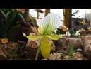 Orchideenschau 2018 im Botanischen Garten der Universität Leipzig