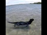 Кот обожает плавать