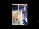 Little CAT Funny