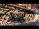 Камасутра для жуков 18+