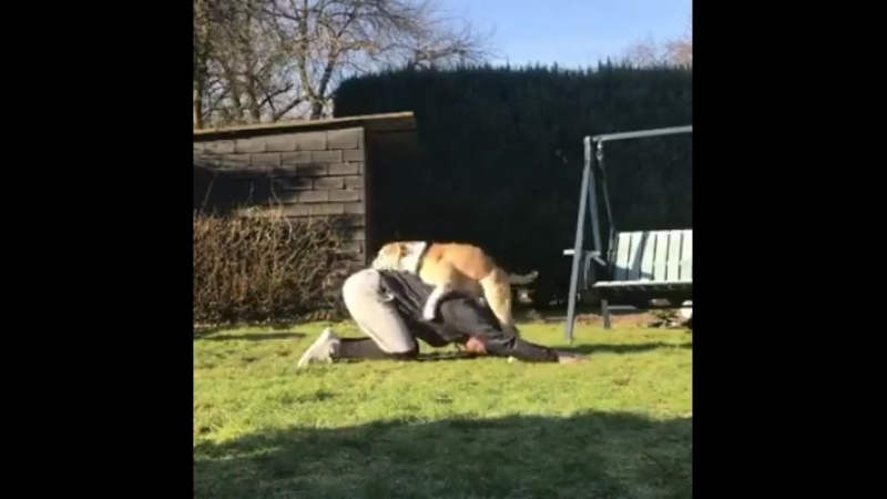 Йога с собакой ожидания и реальность