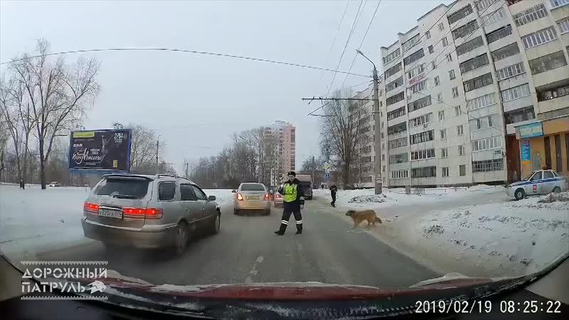Хромая собака и госавтоинспектор
