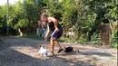 Джек-Рассел-Терьер Юна 2,5года дрессировка с котами