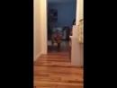 Пёс аккуратно проходит мимо спящего кота