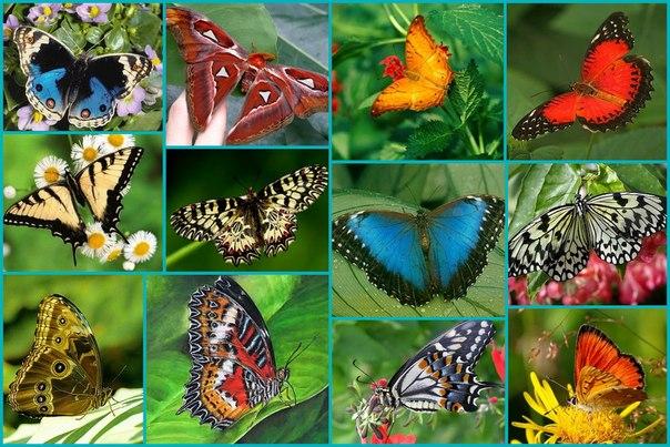 - Жизненный цикл некоторых бабочек составляет 2 года.  - Некоторые виды бабочек могут развивать скорость 50 км/ч.