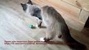Она вернулась с того света Спасенная кошка инвалид До слез | Animal shelter | Disabled pets