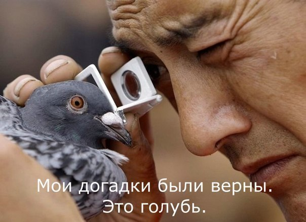 http://cs402429.userapi.com/v402429637/1e356/RnQOfALGcNc.jpg