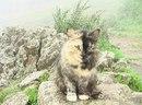 Киска-гид в Абзаково, живет при кафе на горе и при подъемнике…