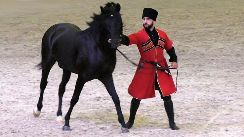 Удар копытом сбил его с ног! Кабардинская порода лошадей /Kabardian horse Иппосфера Hipposphere