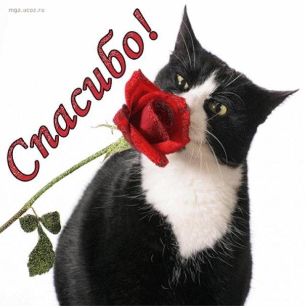 Школьную тему, открытки кошки спасибо