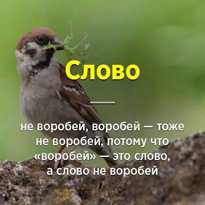 https://sun1-12.userapi.com/c7001/v7001048/47d89/q2DmAdH4eWo.jpg