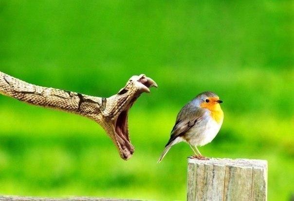 Забавные животные и птицы. - Страница 2 KHpy7WtHatM