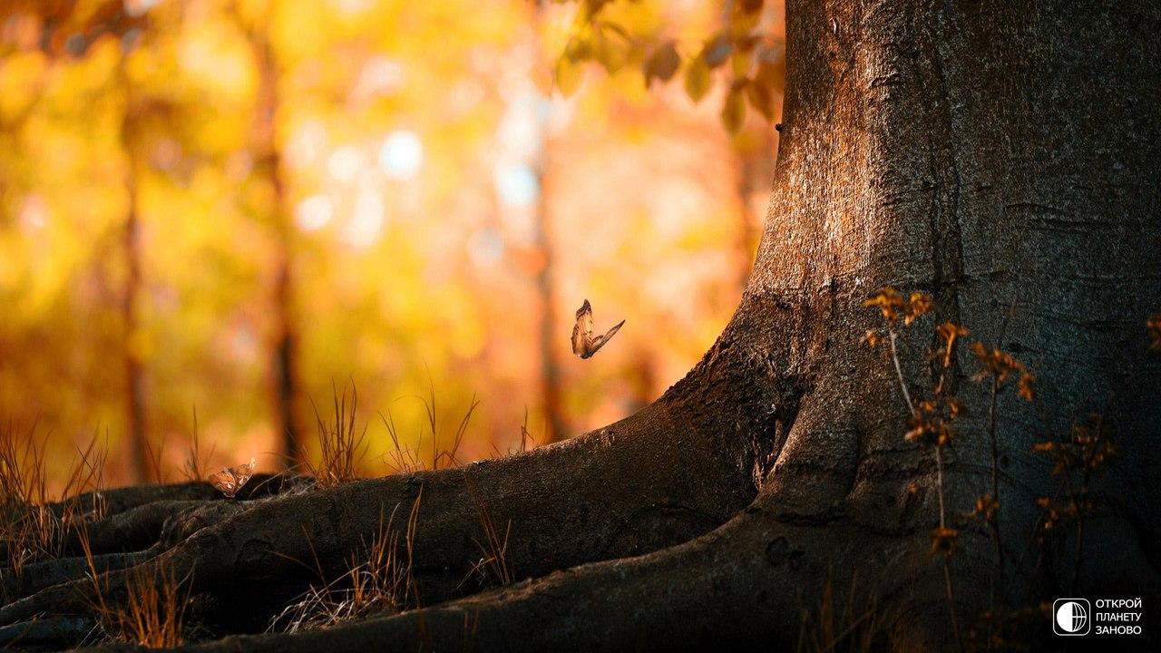 Сказочное утро в лесах Франции
