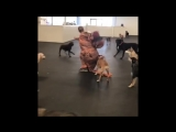 Dogs totally baffled my man in t-rex costume