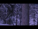 Trapper Spots Something Odd In The Bush.