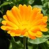 Flosium.ru — блог о садовых и комнатных цветах