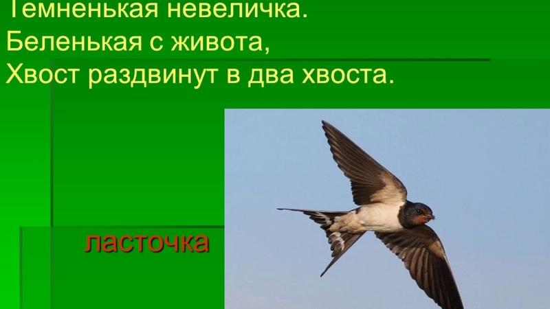 Презентация на тему: Перелётные и зимующие птицы