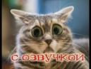 Приколы с котами - СМЕШНАЯ ОЗВУЧКА ЖИВОТНЫХ – ТЕСТ НА ПСИХИКУ 2018 - DOMI SHOW